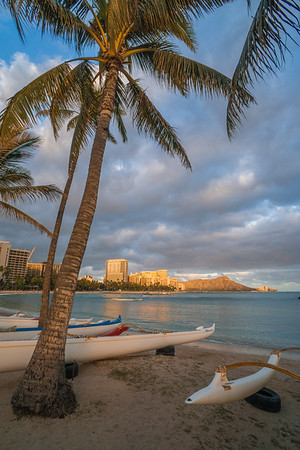 Palm Trees over Diamond Head