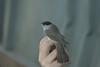 Pesach2012-Birds 28