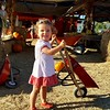 Afternoon trip to Nicasio pumpkin farm