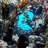 Discovering the underwater world at the Academy of Sciences
