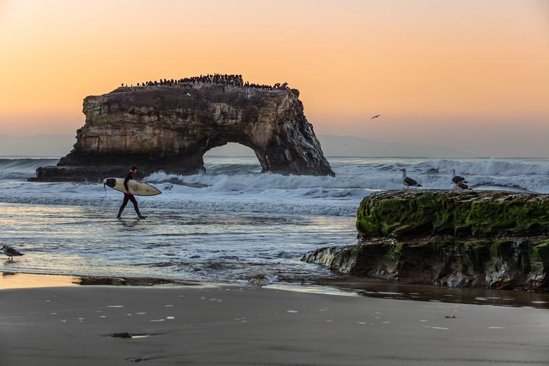 Natural Bridges Surfer