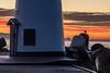 Lone Gull Waiting for Sunrise