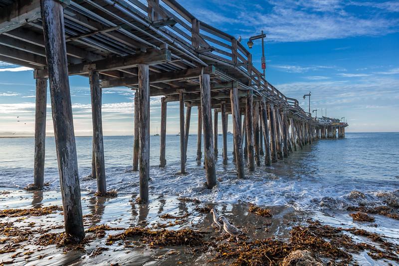 Seagulls Patrolling Capitola Beach