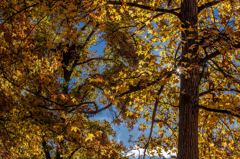 Fall Color Sunstar