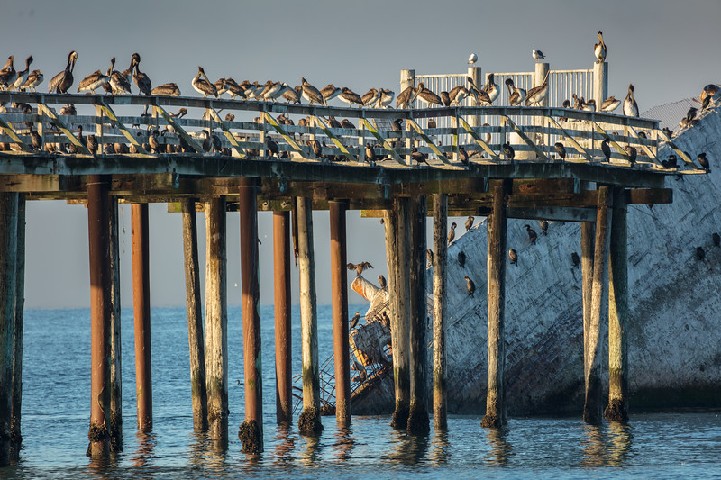 Seacliff Beach Pier and Ship