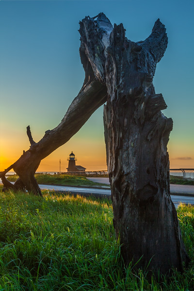 Treed Lighthouse