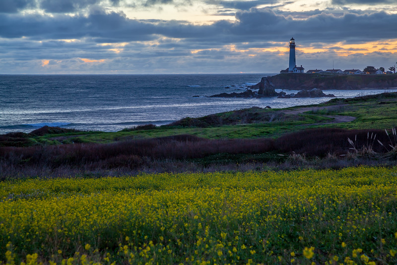 Wildflowers at Pigeon Point