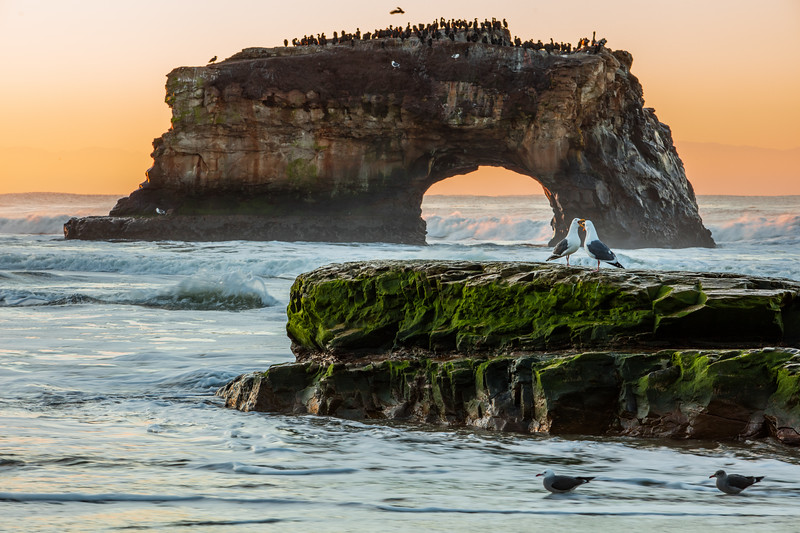 Noisy Gulls at Natural Bridges