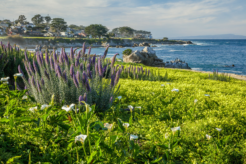 Pacific Grove Winter Color 2
