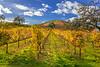 Sonoma County Fall 1