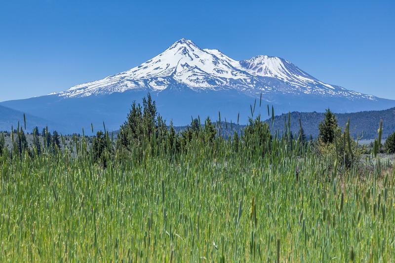Mt Shasta 2