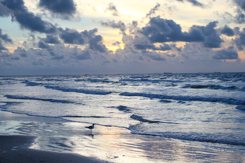Sea gull at dawn on the beach