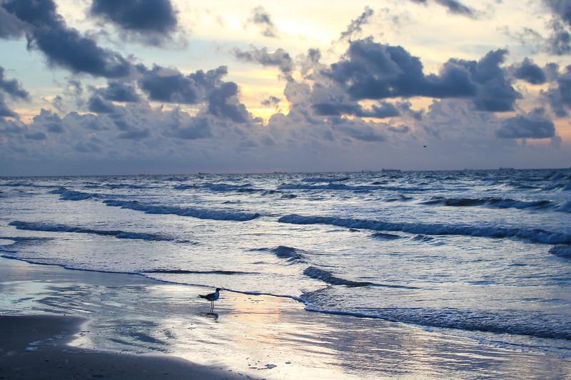 Sea gull at dawn on the beach