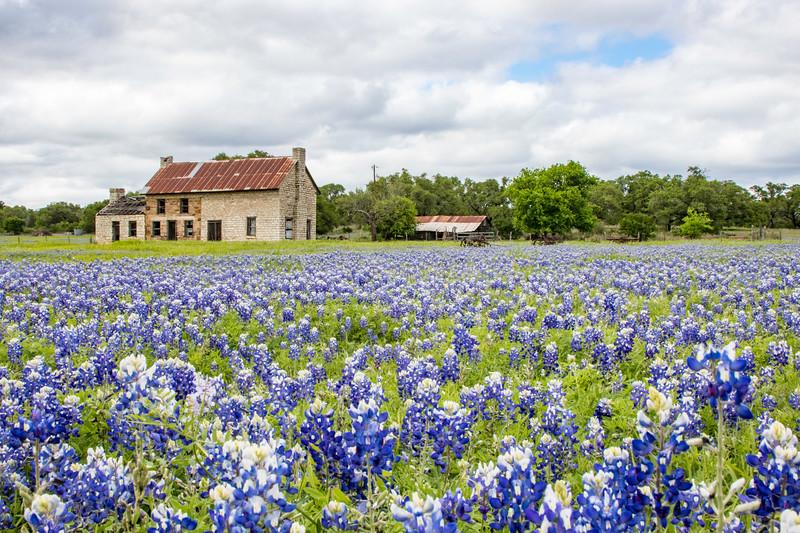 Wildflower Spring in Texas