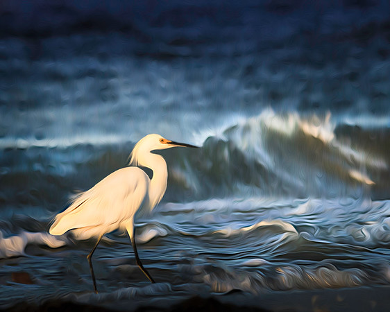 To start bird slide show click on image above.<br /> <br /> I took this shot at Bowditch Point, Estero FL