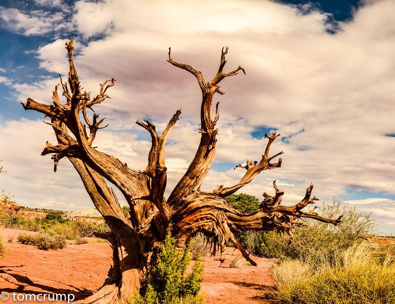 Canyonlands Nat'l Park<br /> Moab, Utah