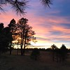 Meadow at sunset, Kaibab Nat'l forest, Arizona