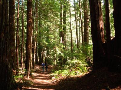 Hiking Butano State Park, CA