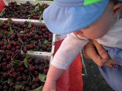 Kelly and Cherries at the Marin Farmer's market