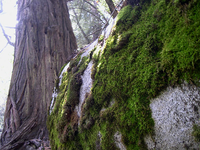 Moss covered rock on the Mist trail