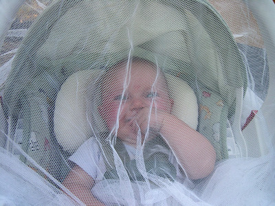 Kelly under netting (the bugs were hungry)