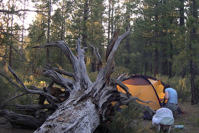 Our campsite in Lassen National Forest