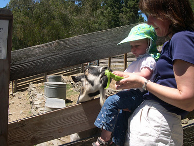 Feeding the goats at Tilden