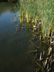 Jorden Pond