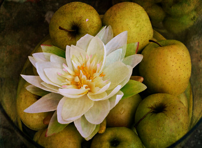 Flower and Apples