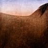 PK_Shire_Horse_Crop_2005