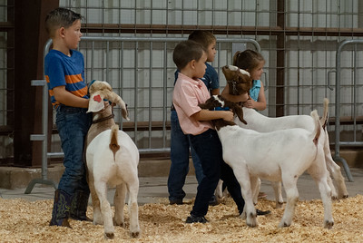 201900803_kellyville_goats-5