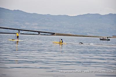 64th Across the Lake Swim in Kelowna, BC