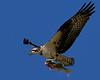 DSC00521_FlyOspreyO31st_Kpr