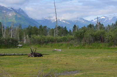 Wilderness Volunteers: 2017 Kenai National Wildlife Refuge (Alaska) Service Trip