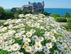 Daisies and The Stone House