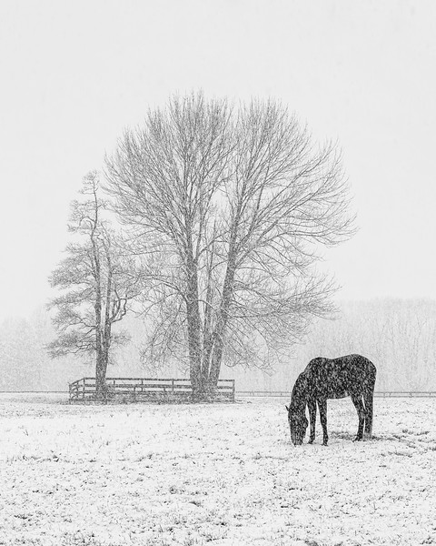 Lone Horse On A Snowy Day