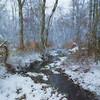 Creek on a Snowy Day