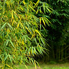 Bamboo Leave