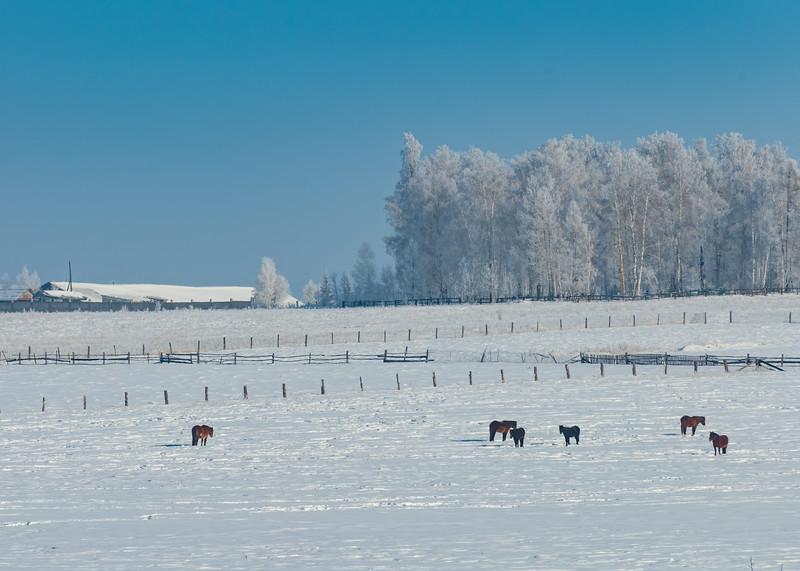 Wintery Farm Scene