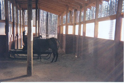 One of our first barns - I built it so open air  could flow through.