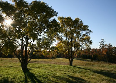 Our backyard is 10 acres of pasture.