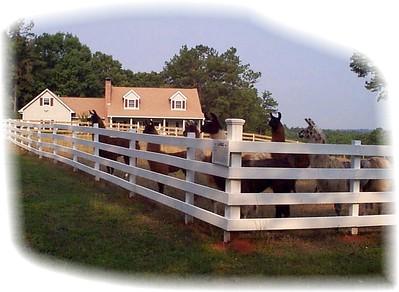 Our 1st farm - Spring 2001