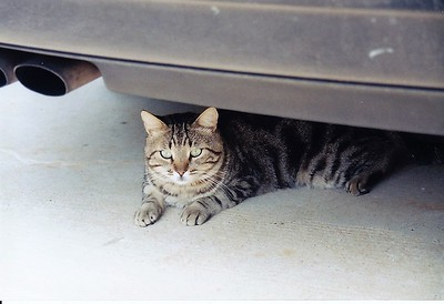 My buddy - Attila in the carport