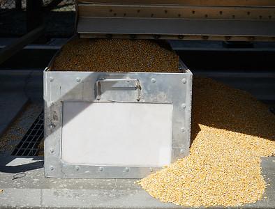 #2 grade Corn for distillery
