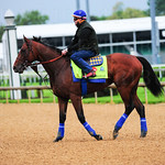 American Pharaoh am works.