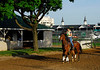 KyDerby133-Backside-08
