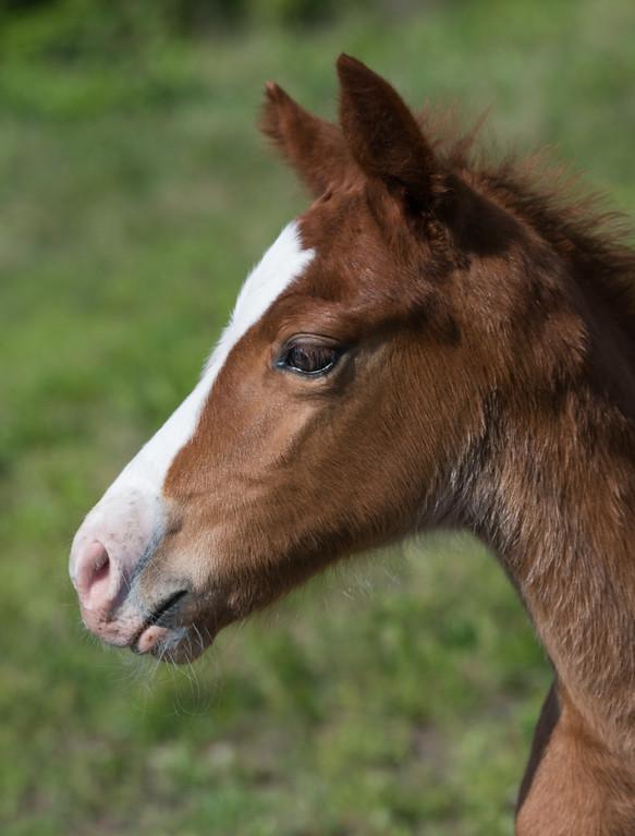 Colt Foal, ElkView Band 1, Breathitt County