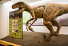A dinosaur exhibit at the Creation Museum in Petersburg, Kentucky, USA.