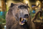 The taxidermy exhibit at the restaurant at The Ark Encounter, Williamstown, Kentucky, USA.