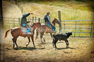 Roping Milpitas, CA. April 2010